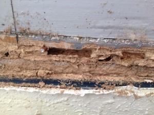 Beneficios de realizar un correcto tratamiento de termitas cuando las encontramos en nuestra casa Termitas Premià de Dalt