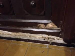 Nueva plaga de termitas en un puerta de madera muy antigua localizada por Termitas Barcelona
