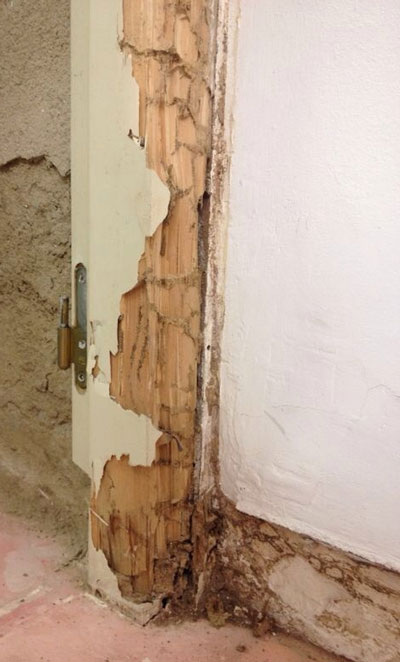 Termitas plaga de la madera  como eliminarlas, Termitas Girona Conplag